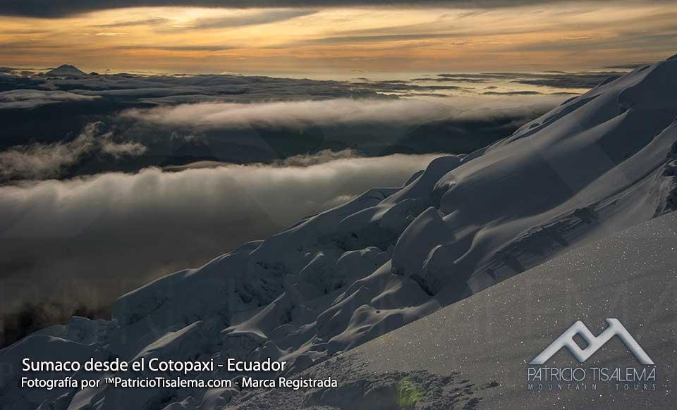 Wild Sumaco from Cotopaxi volcano
