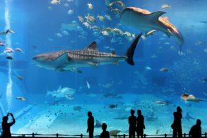 Flora y fauna marina de los 7 mares